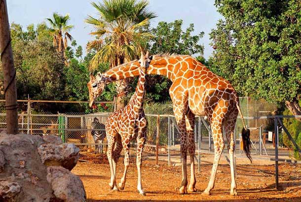 Местный зоопарк в Пафосе