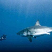 Стоит ли опасаться акул на Кипре; другие обитатели моря