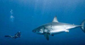 Стоит ли опасаться акул на Кипре
