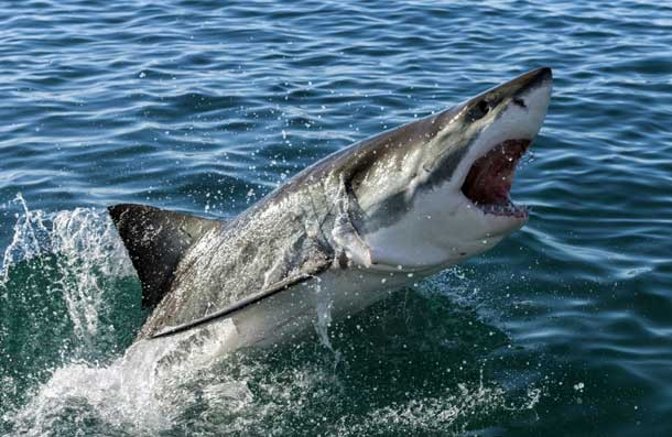 Акулы на Кипре фото