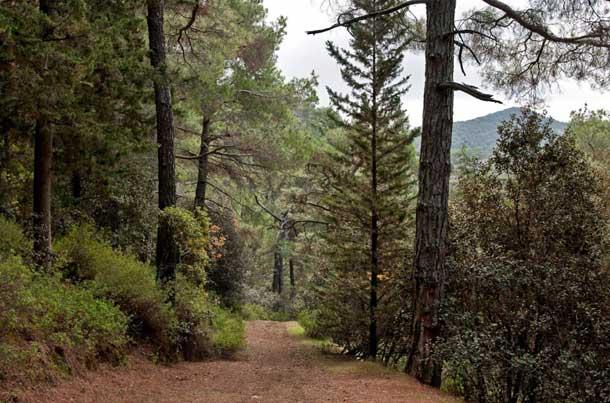 Лесной парк мыса Капо Греко