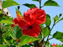 Флора Кипра: цветы, растения, фото