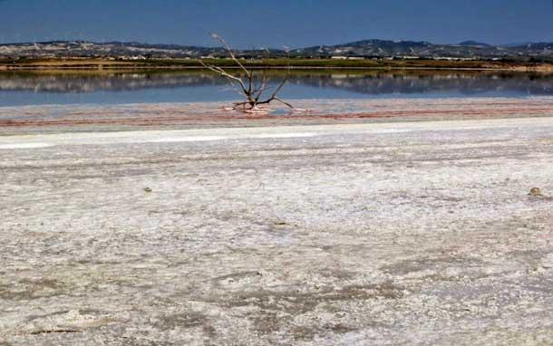 Ларнака - озеро фламинго