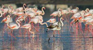 Ларнака соленое озеро фламинго