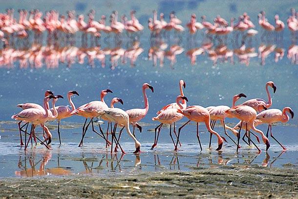 Соленое озеро на Кипре фото