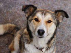 Успей спасти! Помощь собакам Кипра