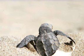Жители острова Кипр проведут демонстрацию на заповедном черепаховом пляже.